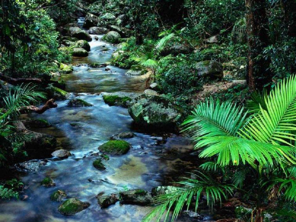 ruisseau2.jpg